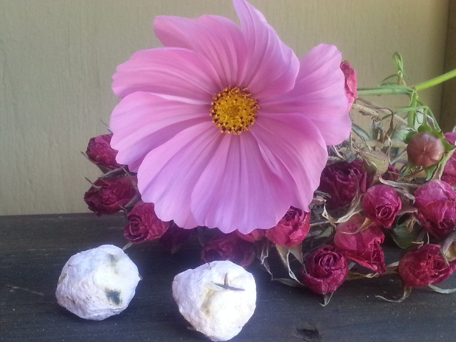 Pink Cosmos Seed Bombs plant able paper seed balls garden