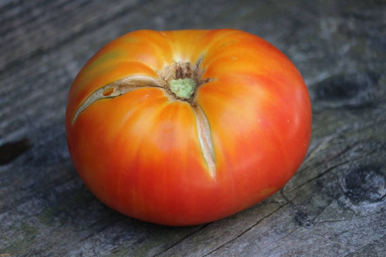ORGANIC BEEFSTEAK TOMATO SEED TOMATO NON- GMO 25 SEEDS PER PACKAGE
