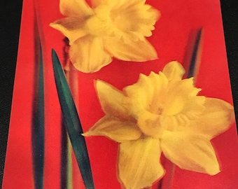 1960's lenticular 3D yellow flower scene post card with nice vibrant colors