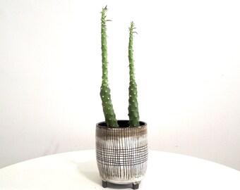 SALE >> sDark brown and white striped ceramic planter, tripod planter