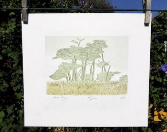 Point Reyes Cypress