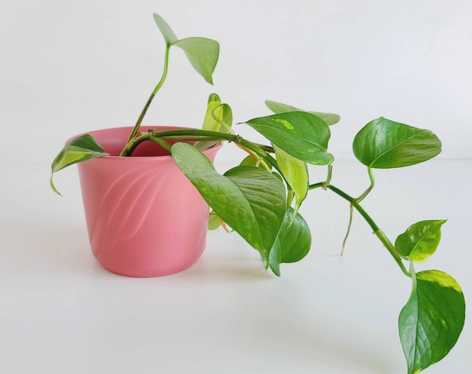 Vintage matte pink planter pot | mid century pottery | made in Germany |