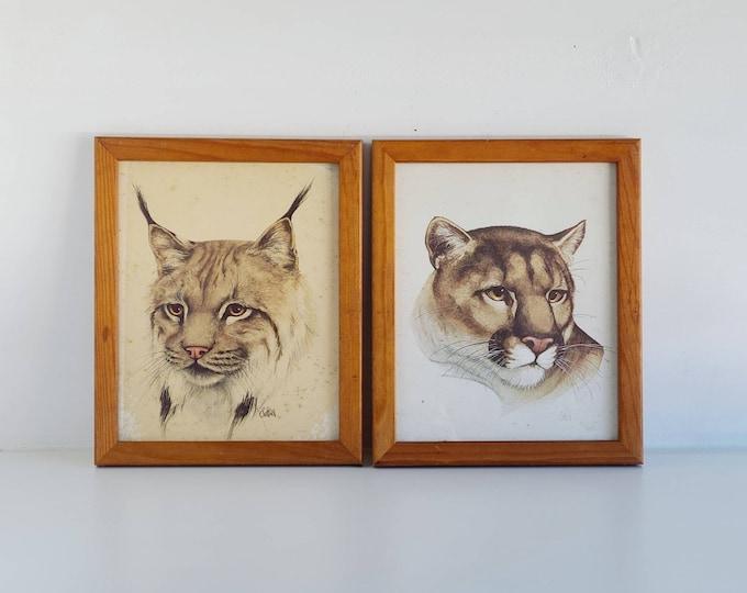 Vintage framed wild cat art prints | Sattiel cougar and lynx artwork |