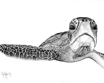 "Limited Edition Turtle Prints ""Kaiholo"""