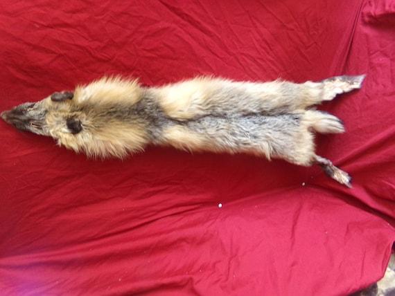 1bb9beb9dccdf real animal tanned cross fox skin pelt hide fur rug taxidermy leather man  cave