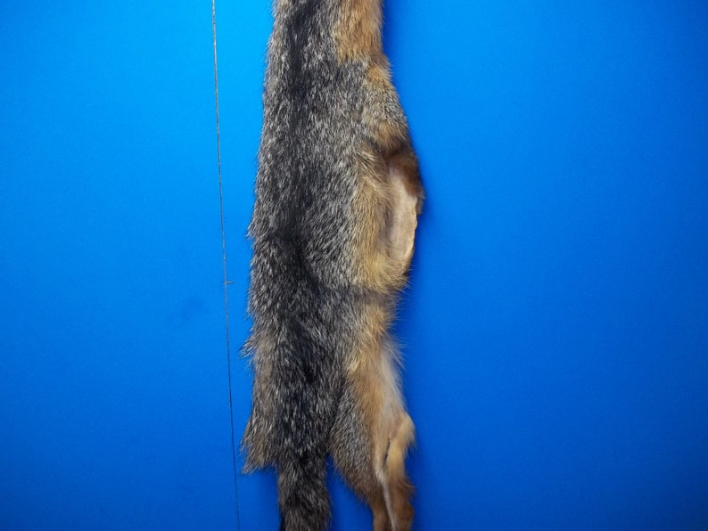 94f75eef828c9 real animal tanned 4 feet gray fox skin pelt hide fur rug taxidermy leather
