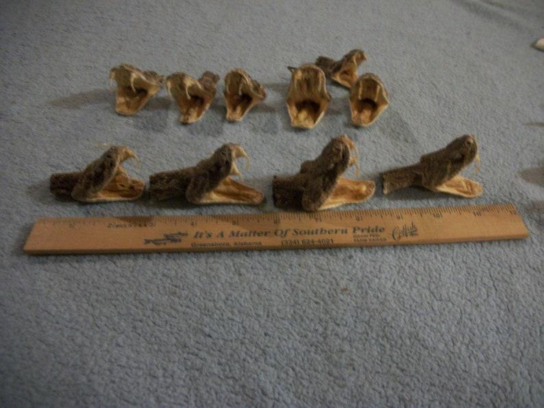 1 real animal taxidermy Western Diamond back rattle snake head mount stuffed reptile part