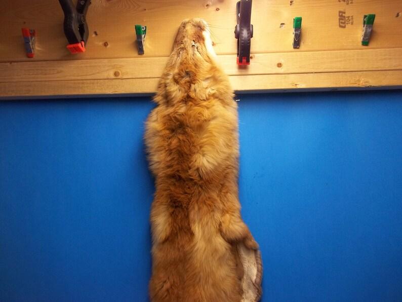 6835651f2689c real animal tanned 4 feet red fox skin pelt hide fur rug taxidermy leather