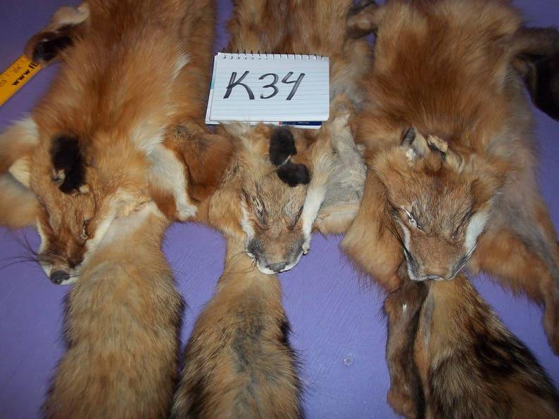 5b71434fbdf51 1 real animal tanned red fox skin pelt hide fur rug taxidermy leather man  cave