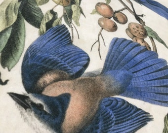 Vintage Bird Print Tea Towel - Florida Jay