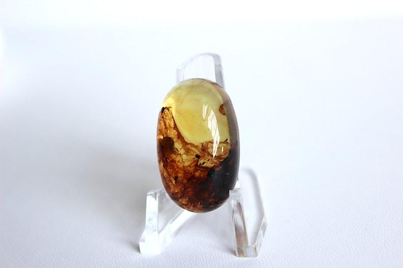 Dominican Amber Oval Medium Cabochon