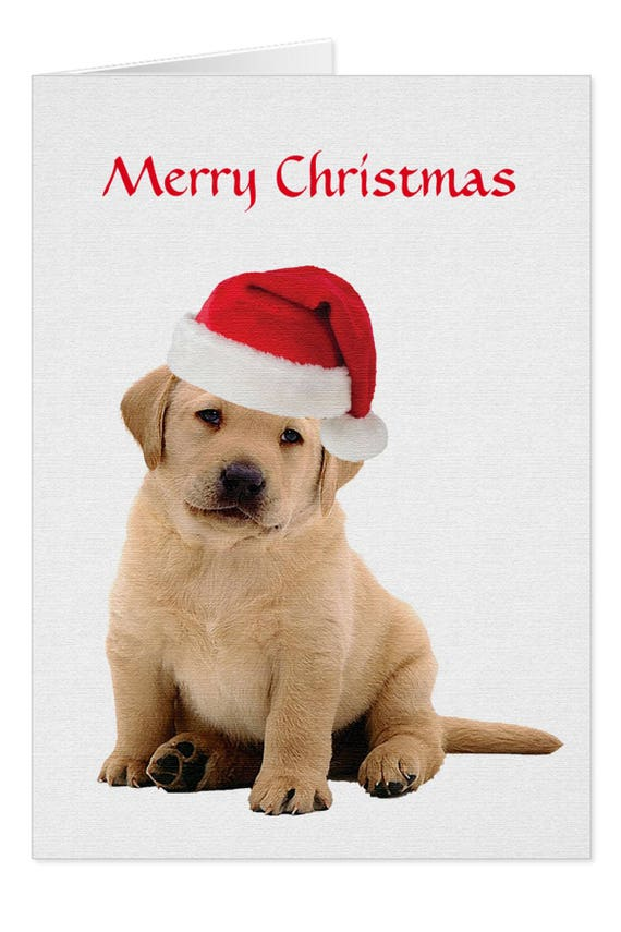 Yellow Lab Cards T10YCAR Holiday Cards Labrador Christmas | Etsy
