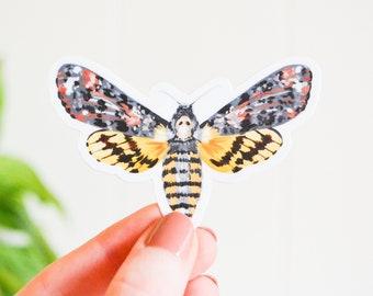 "Death's-Head Hawkmoth Sticker, Die Cut 3"" x 2"", Handmade Vinyl Sticker from Acrylic Painting, Moths Sticker Collection Set, Skull Death Moth"
