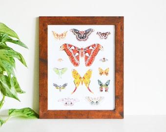"Moth Species Art Print 8""x10"", Life Size Moths, Made from an Original painting, Atlas, Lunar, Rosy Maple, Comet, Promethea, Sunet, Frame"