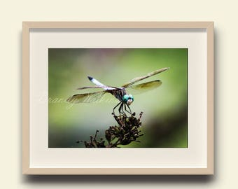 Dragonfly picture, dragonfly decor, dragonfly wall art, nature photography, photography print, boys room wall art, nursery wall art
