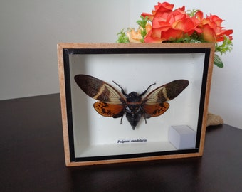 dcc7986b8ea Moth taxidermy | Etsy