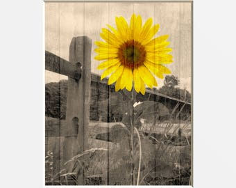 Sunflower Wall Decor, Rustic Sunflower Landscape, Farmhouse Decor, Country  Sunflower Home Decor Matted Picture