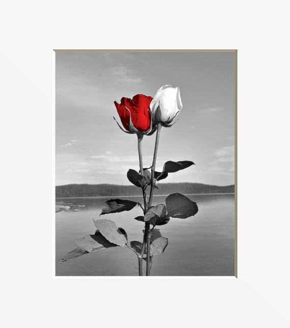 Black White Red Decor, Red Gray Rose Flower Decor, Lake, Red Pop Of Color,  Red Bathrom Bedroom Wall Art Matted Picture
