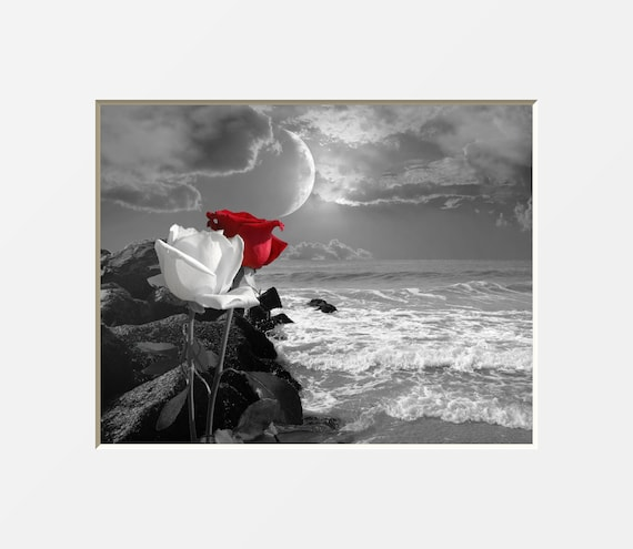 Black White Red Wall Art Red Gray Rose Flowers Coastal Ocean