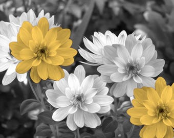 Yellow Gray Flowers, Yellow Flower Prints, Yellow Gray Modern Bathroom Bedroom Artwork Matted Picture