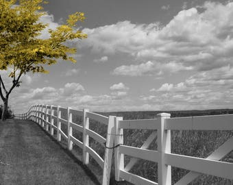 Black White Yellow Decor, Yellow Tree Landscape, Yellow Pop Of Color, Yellow Wall Art Pictures