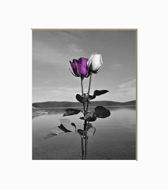 Black White Purple Wall Decor, Purple Rose Flower, Purple Bedroom, Bathroom  Purple Wall Art Matted Picture