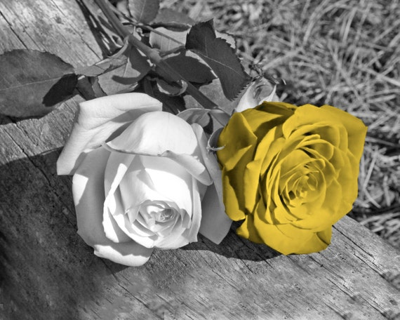 Black White Yellow Rose Flower Yellow Pop Of Color Yellow Etsy