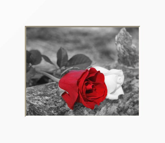 Black White Red Rose Flower Wall Art Red Pop Of Color   Etsy