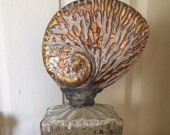 African Abalone Vintage Bottle