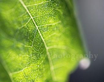 Green Leaf Fine Art Print. Macro Photography Print. Leaf Art Photo. Nature Wall Art. Canvas Art Print, Unframed Photography, Framed Prints
