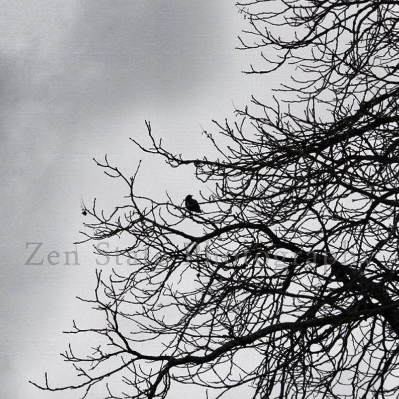 The Watcher Bird Photography. Wall Hanging. Nature Photography image 0