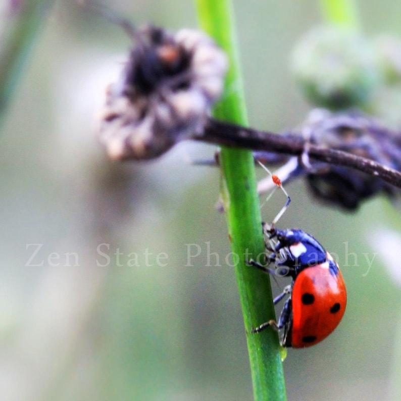 Ladybug Nature Photograph Lady Bug Wall Art  Photography Print image 0