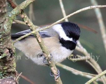 Bird Photography Print. Nature Photography Print. Bird Wall Art. Wildlife Photo Print, Framed Print, or Canvas Print. Home Decor.