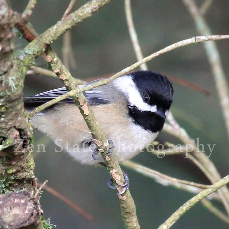Bird Photography Print. Nature Photography Print. Bird Wall image 0