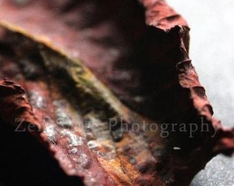 Autumn Leaf Photograph. Fall Leaf Nature Print. Macro Photography. Unframed Photo Print, Framed Photography, or Canvas Print. Home Decor.