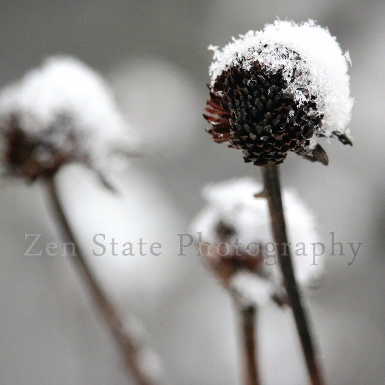Snow Fall Print. Nature Print. Snowflake Photo. Macro image 0