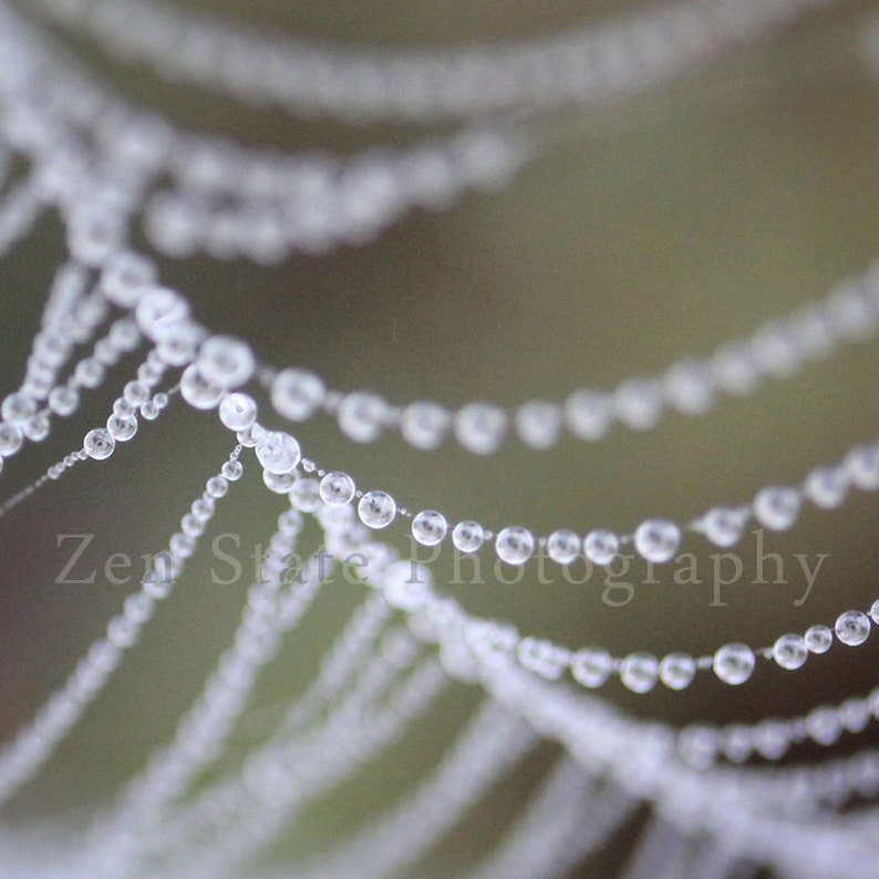Dew on a Spider Web Photo. Nature Print. Dew Photography image 0