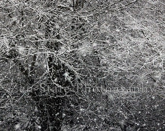 Winter Photo. Nature Print. Snow Photography Print. Winter Landscape Wall Decor. Photo Print, Framed Photo, or Canvas Print. Home Decor.