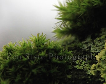 Rainforest Photography Print. Nature Wall Decor. Macro Photography. Tree Moss Photo Print, Framed Print, or Canvas Print. Home Decor.