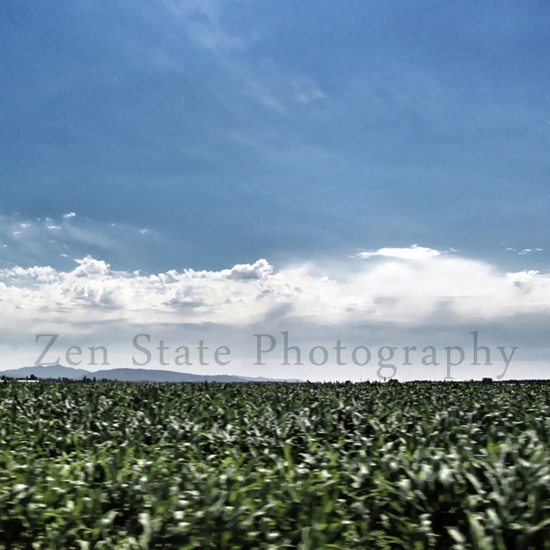 Corn Field Print Color Photography. Custom Fine Art image 0