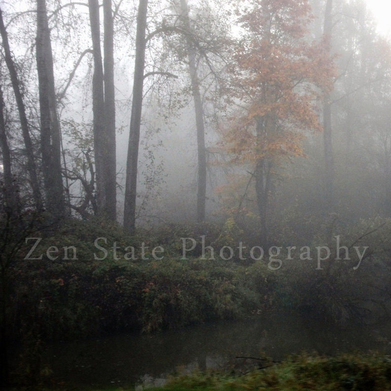 Foggy Forest Photograph. Nature Photography Print. Creek Photo image 0
