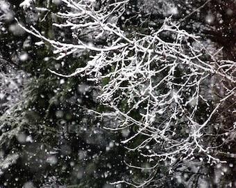 Winter Snow Photography. Landscape Photo Print. Nature Photography. Square Format Photo Print, Framed Print, or Canvas Print. Home Decor.