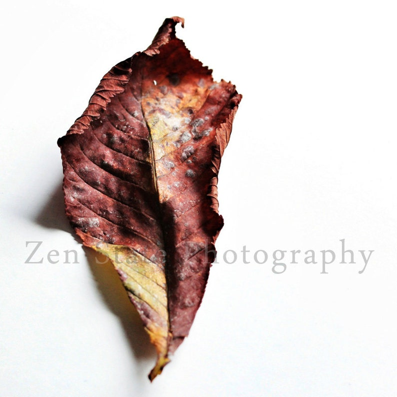 Fall Leaf Wall Hanging. Autumn Art Wall Decor. Nature image 0