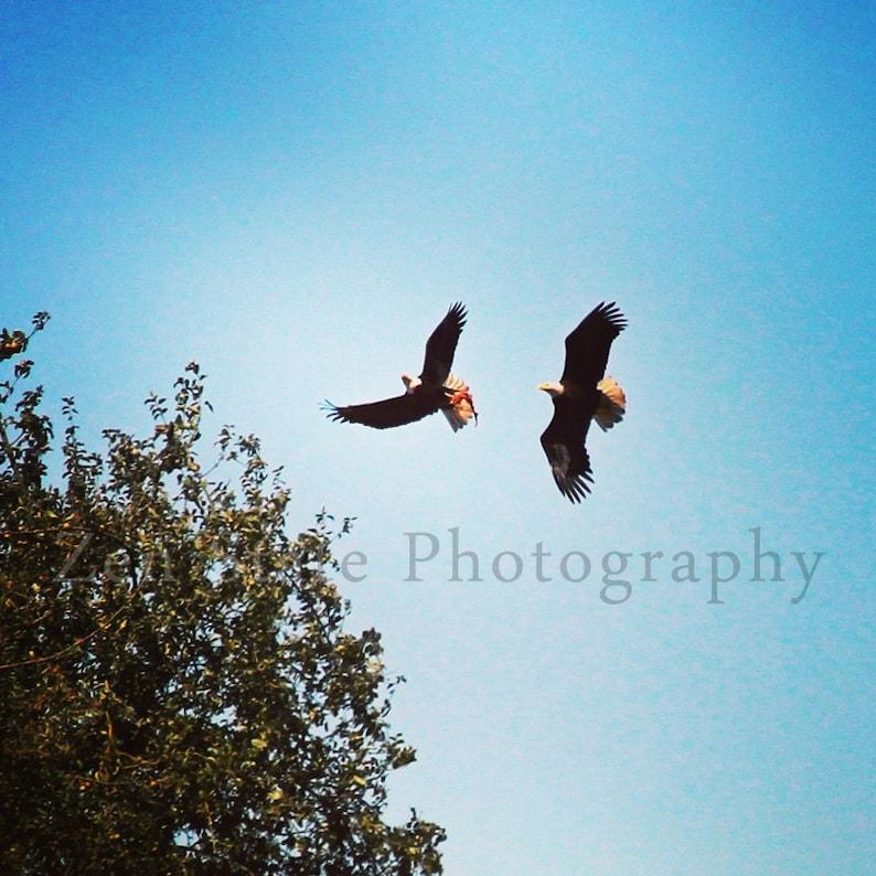 Dancing Eagles Photography Print. Bird Photo Print. Bald Eagle image 0