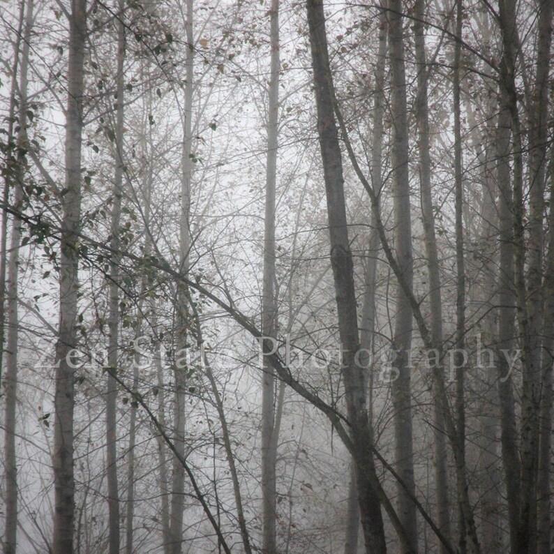 Fog Photo Foggy Forest Fine Art Print Woodland Decor Gray image 0