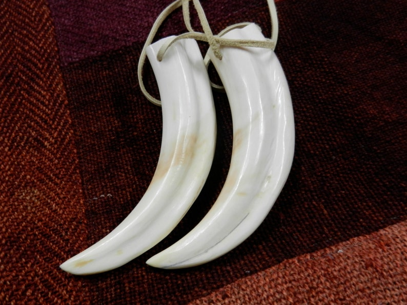 Wild Boar/'s Tusk Pendant Polished Cleaned And Drilled With Two Holes On A Tan Microsuede Cord