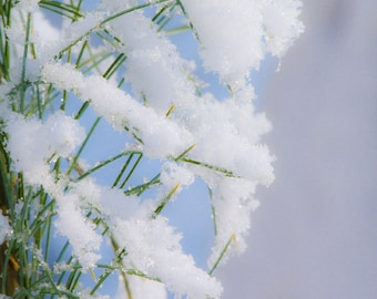 Grass with Snow, photography, wall art, green&white