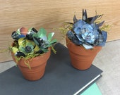 Book Page Succulents potted plant pair