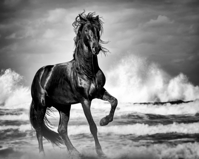 Wild horse print black stallion horse art print horse etsy