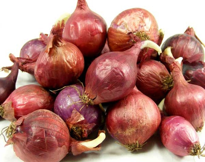 Red Onion Sets Organic | Red Baron Onion Bulbs  8 oz. - Non-GMO SHIPPING NOW